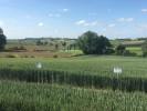 vitrine variétale blé tendre